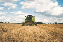 Header harvesting a field of wheat