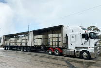 loaded b-double tautliner truck, with open curtains revealing the load of processed timber product
